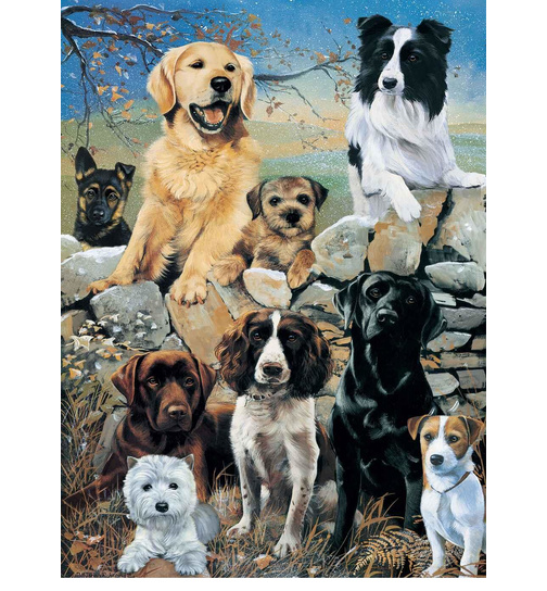 The Look Out - Britische Hunde - Puzzle 1000 Teile