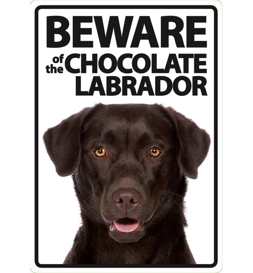 Beware of the Chocolate Labrador - Flexi Portrait - Magnet & Steel