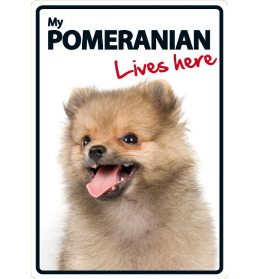 Pomeranian Lives Here - Portrait - Magnet & Steel