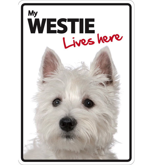 Westie Lives Here - Portrait - Magnet & Steel