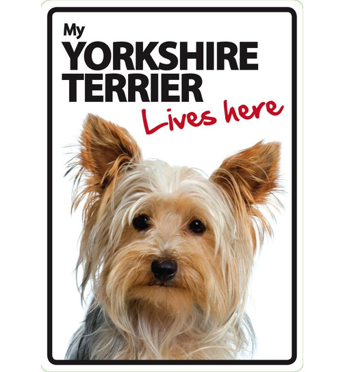 Yorkshire Terrier Lives Here - Portrait - Magnet & Steel