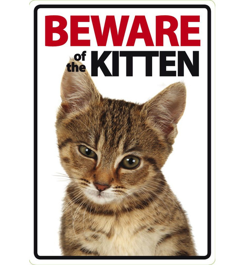 Beware of the Kitten - Portrait - Magnet & Steel
