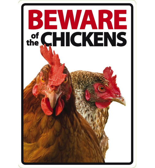 Beware of the Chickens - Portrait - Magnet & Steel