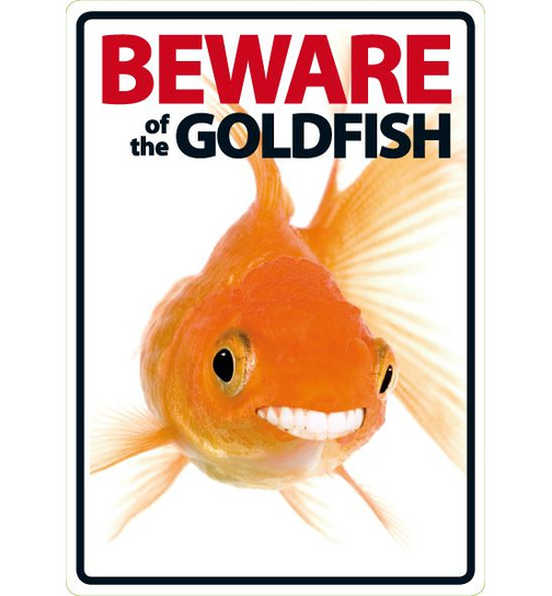 Beware of the Goldfish - Portrait - Magnet & Steel