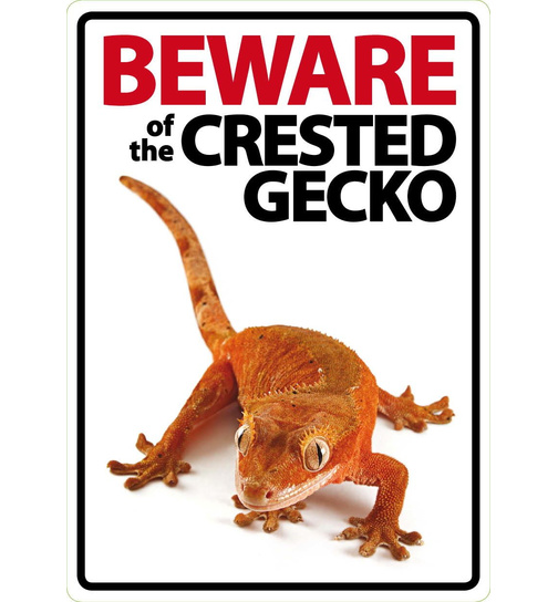 Beware of the Crested Gecko - Portrait - Magnet & Steel
