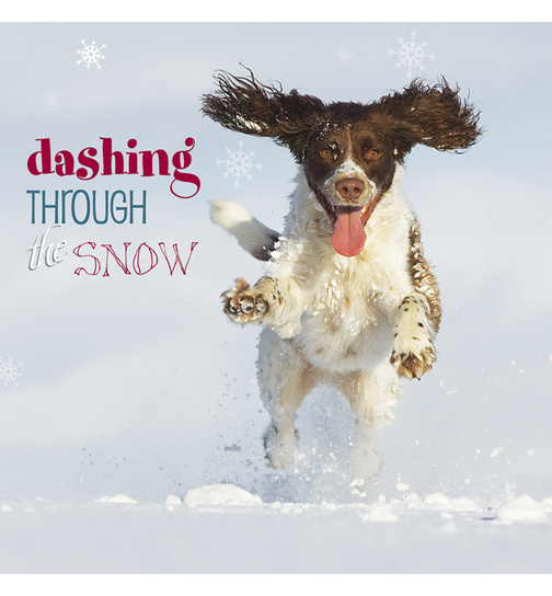Weihnachtskarte - Dashing trough the snow - Springer Spaniel