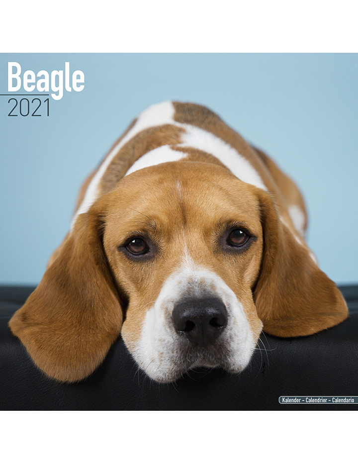 Dog Der Kopfgeldjäger 2021